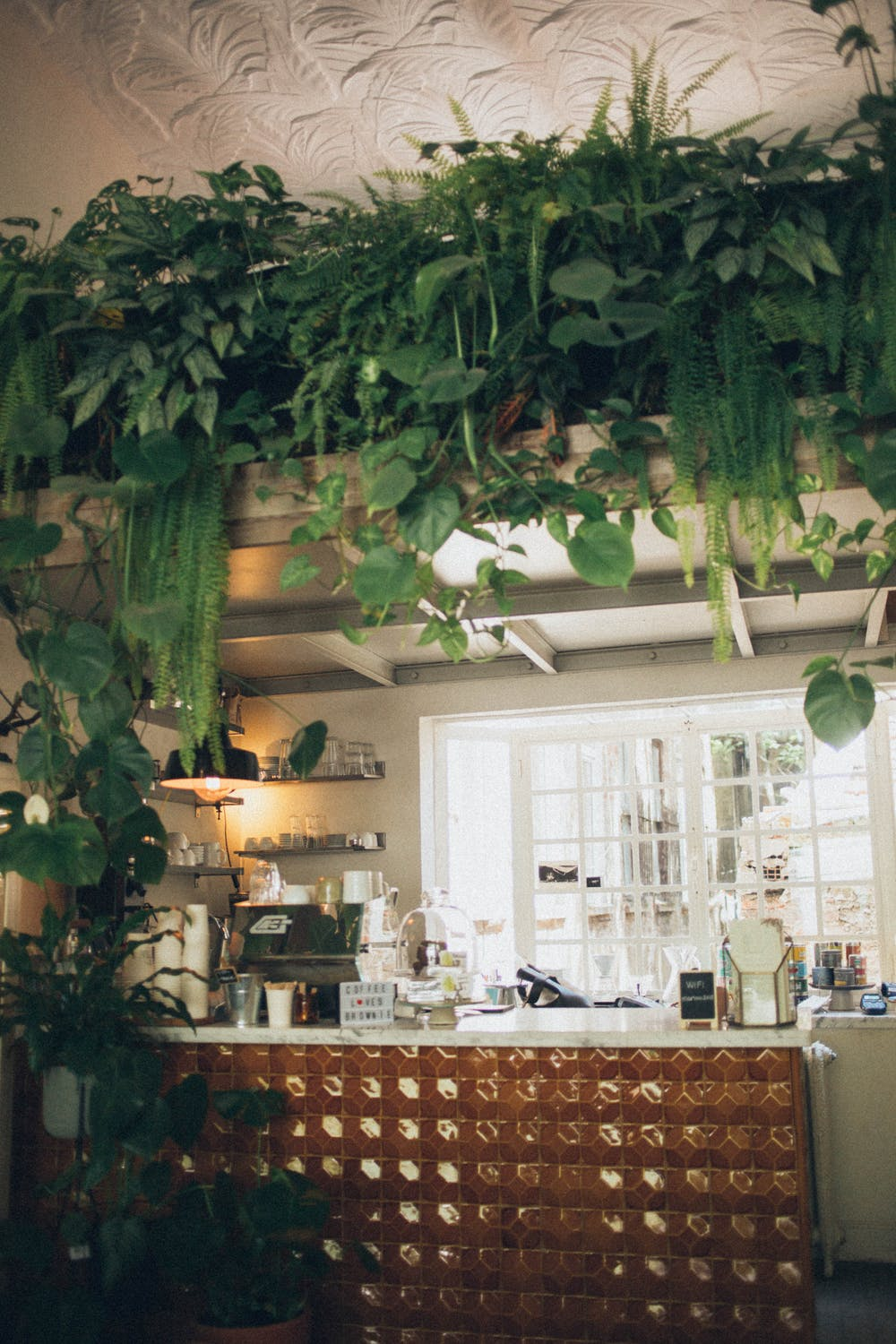 House Plants for Clean Air