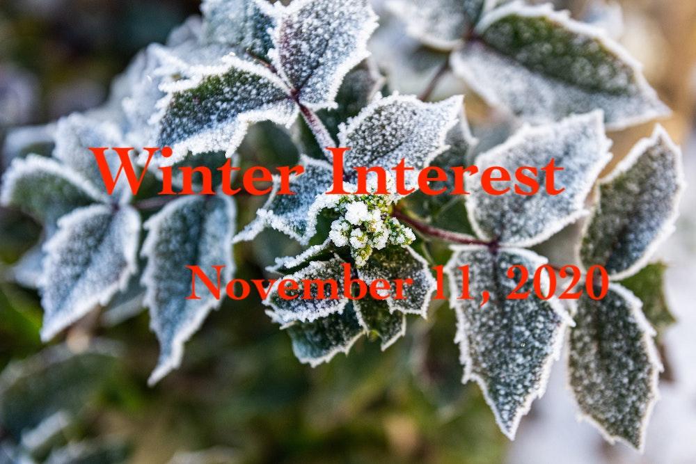Winter Interest, by Cindy Cichorski, November 11, 2020 (Zoom)