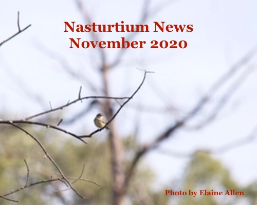 Nasturtium News, November 2020