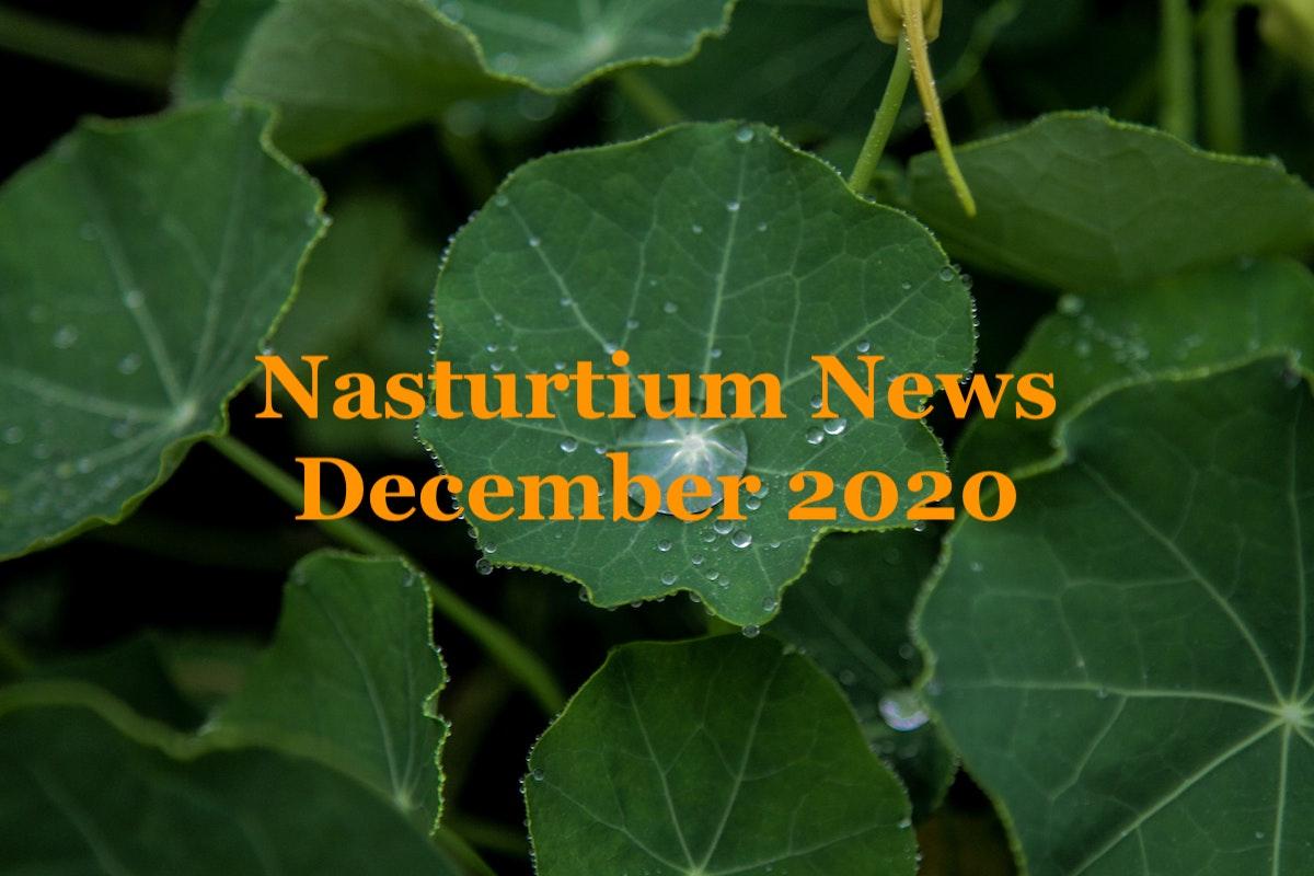 Nasturtium News, December 2020