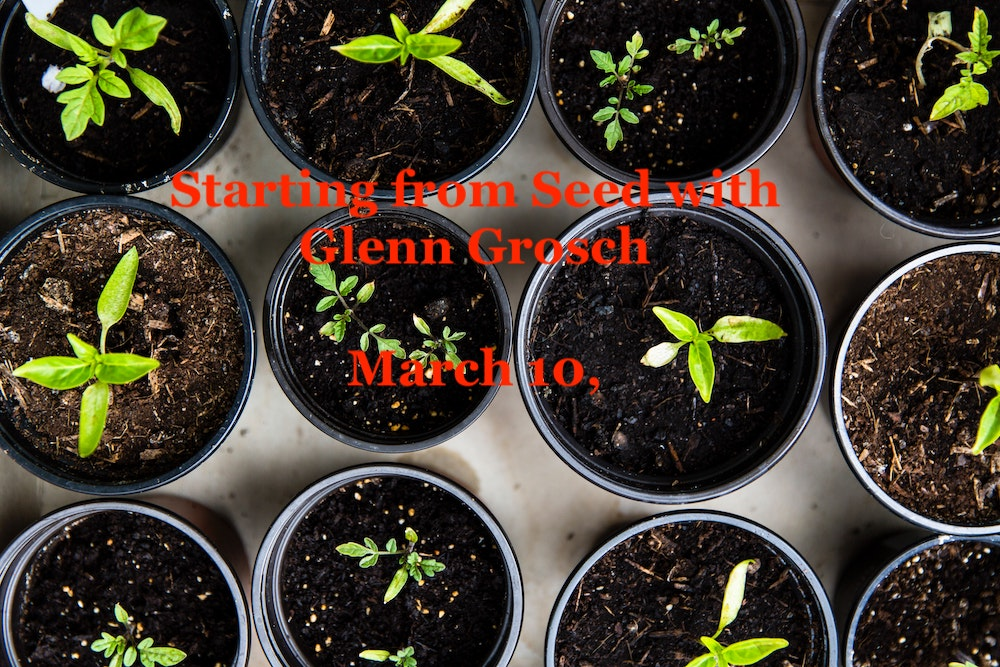 Starting from Seed with Glenn Grosch – March 10, 2021