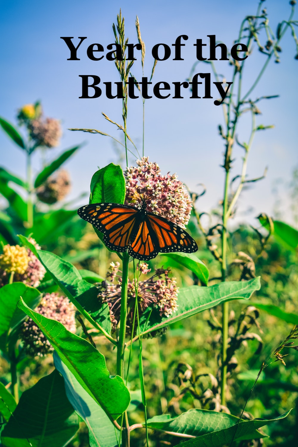 Year of the Butterfly