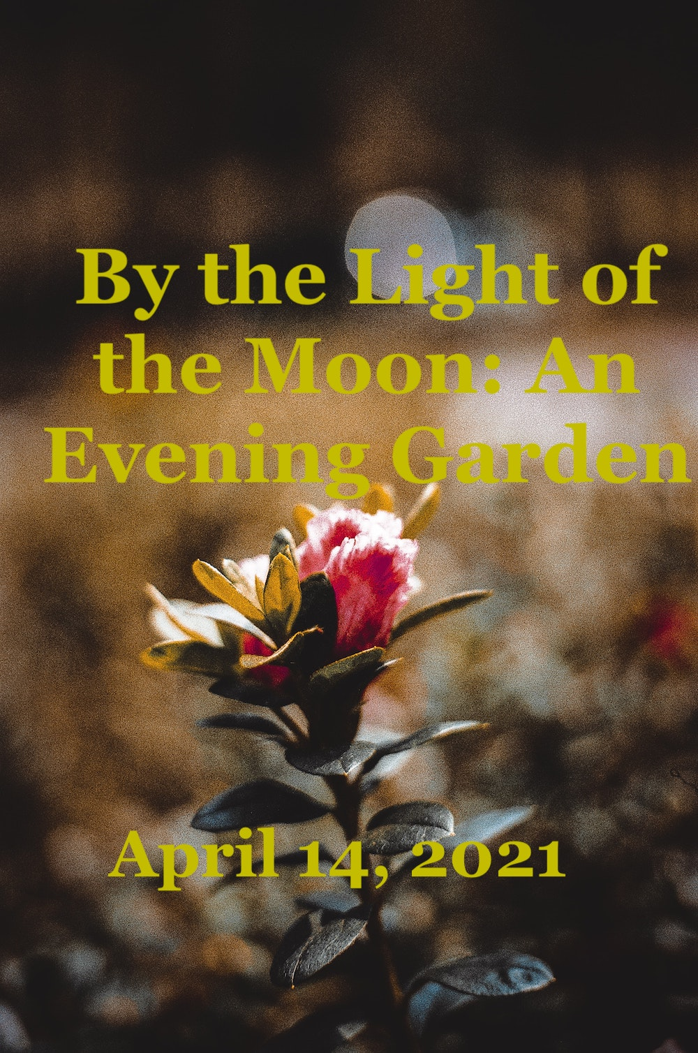 By the Light of the Moon: An Evening Garden, Heather Prince