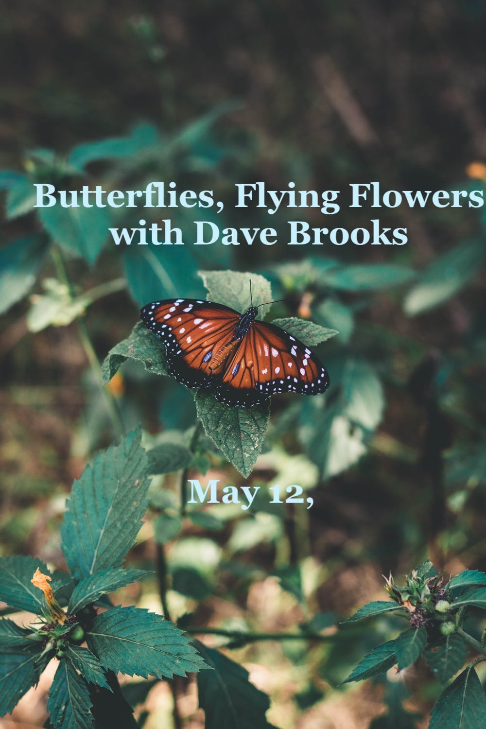Butterflies, Flying Flowers,  Dave Brooks