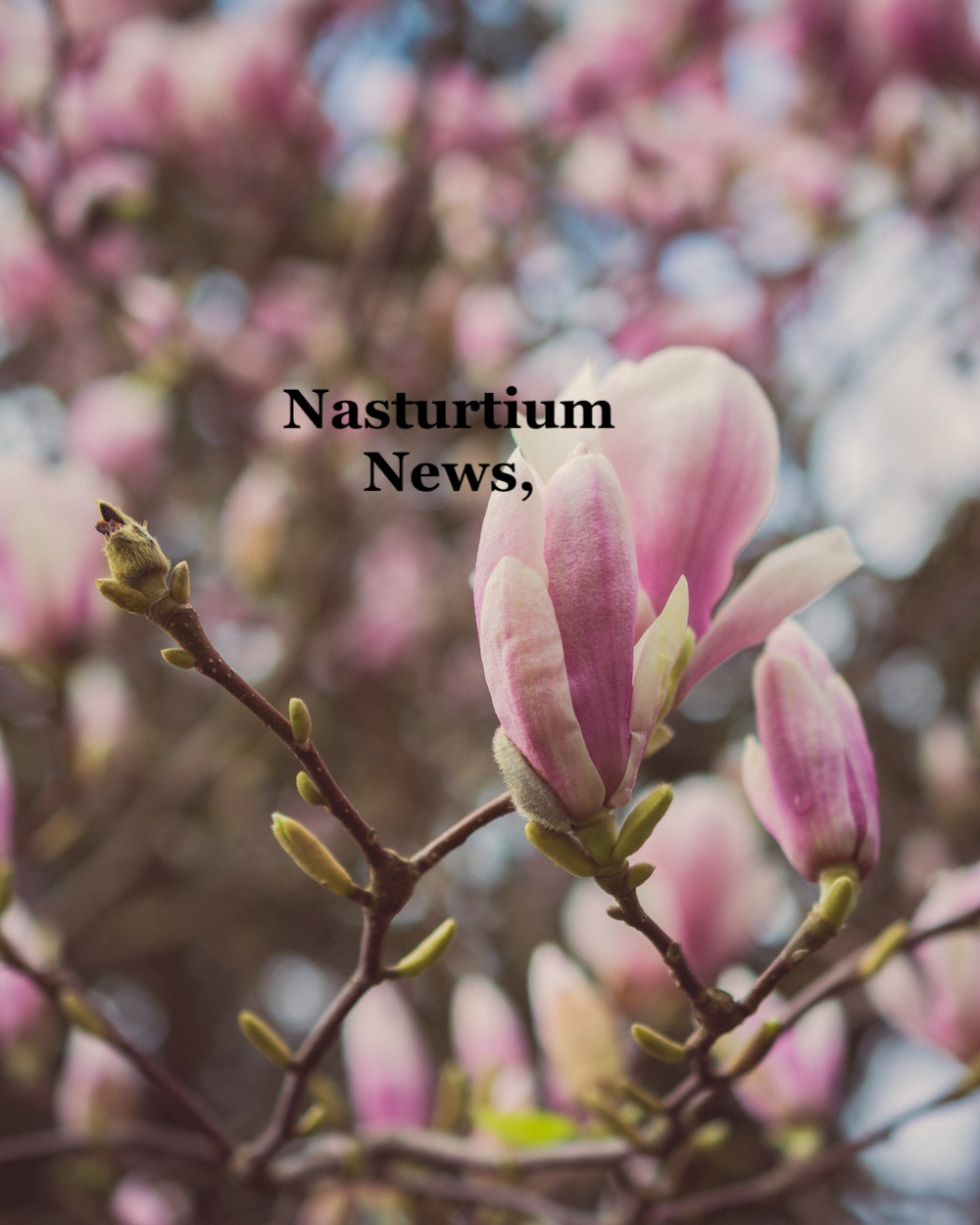 Nasturtium News, April 2021
